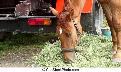 horse at the car