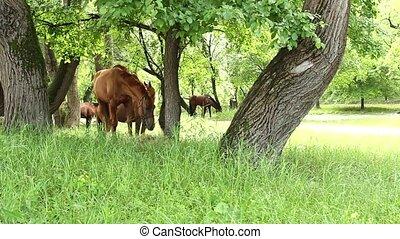 horse hide behind trees