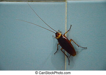 cockroach on bathroom wall