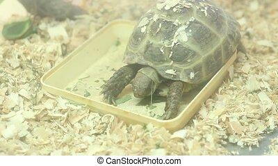 terrarium turtle eating