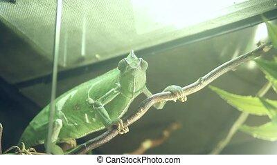terrarium eyes chameleon
