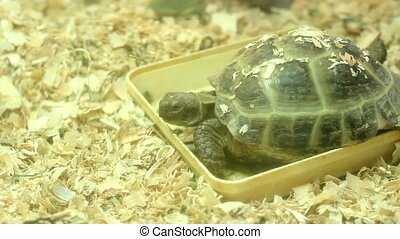 terrarium turtle eating