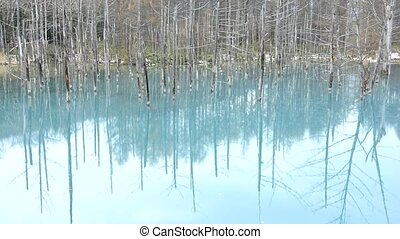 Blue pond - Late autumn of dead trees reflected blue pond