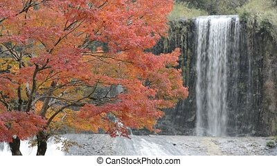 Autumn tree and waterfall - Autumn maple tree in front of...