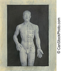 Acupuncture Model Front