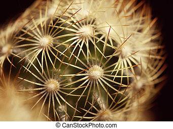 Cactus details - close up