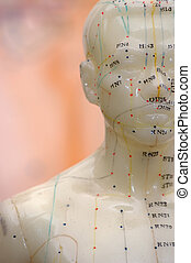 Acupuncture - Cropped close up of an acupuncture model head...