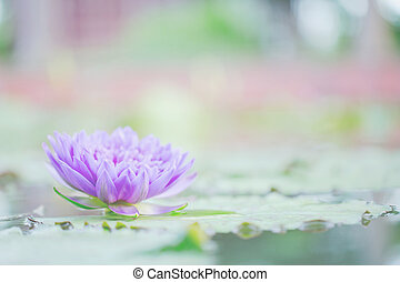 Beautiful lotus flower in nature background