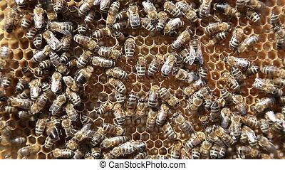 Working bees in honeycombs Beekeeping