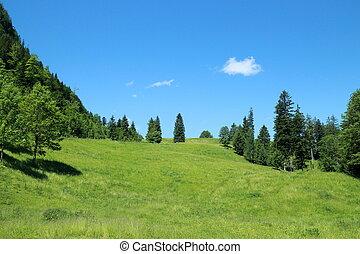 field in alps