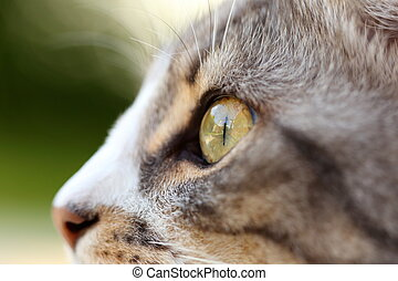 cat eye - macro shot of a grey cats eye