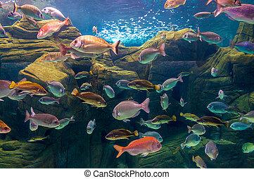 tropicais, peixe, ligado, Um, Coral, recife,