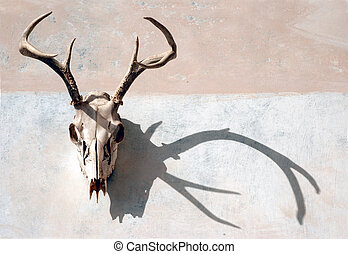 Deer Skull and Shadow - Deer skull with antlers with strong...