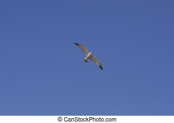 A seagull in the sky