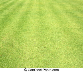 Golf Courses green lawn textured background.
