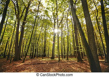 Nord-Wald-e - Wald im Herbst