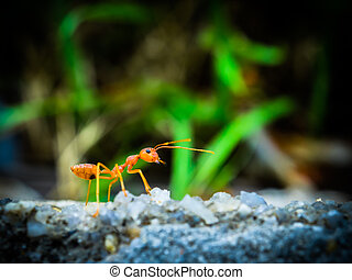 weaver ants in the forest green background