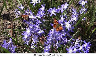 spring flower butterflies