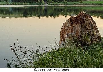 Baumstumpf am Wasser - Baumstumpf der am Ufer steht.