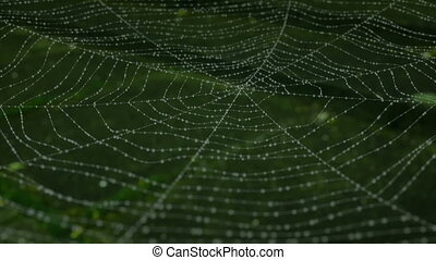 Morning dew on a spider web animation