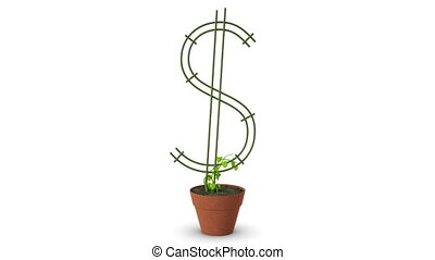 Bonsai Dollar tree Growth of dollar tree Isolated