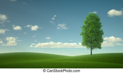 lonely tree in the middle of the field. the fabulous...