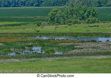 Horicon Marsh in Spring 7