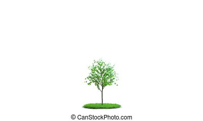 Tree growth on a round green grass Ideal isolation On white...