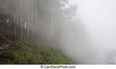 Misty beech forest on the mountain slope