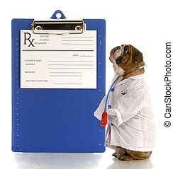english bulldog dressed up as a doctor or veterinarian with...