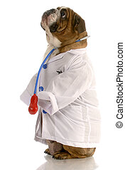 english bulldog dressed up as a doctor or veterinarian
