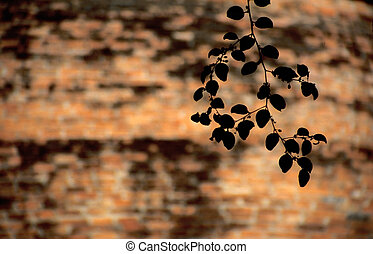 Branch in front of brick wall in Ayutthaya, Thailand