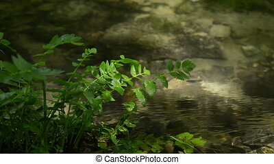 Close up of flowing water stream and plant.