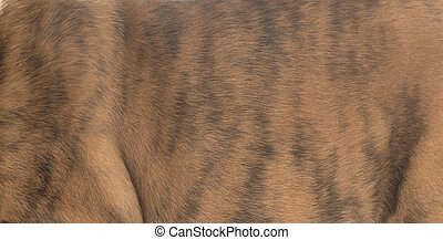 red brindle dog fur - good for use as background