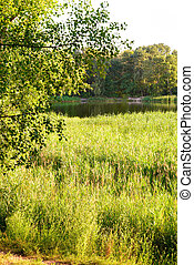 Reeds Close to the Lake - Green reeds are growing close to...