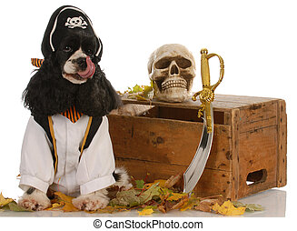 american cocker spaniel dressed up like a pirate