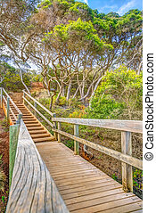 Forest path in Eden Australia - Wooden walkway in the forest...