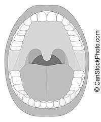 Mouth Teeth Jaw Outline - Outline illustration of an open...