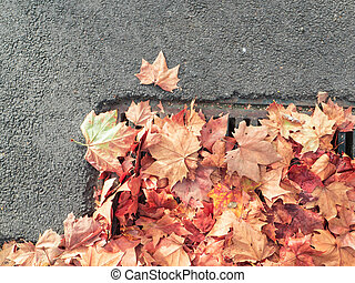 blocking leaves - leaves blocking a stormwater drain