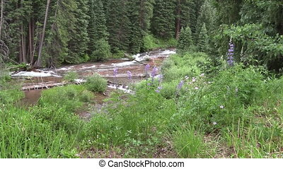 Scenic Mountain Stream - a fast flowing mountain stream