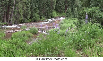Scenic Mountain Stream - a zoom in on a fast flowing...