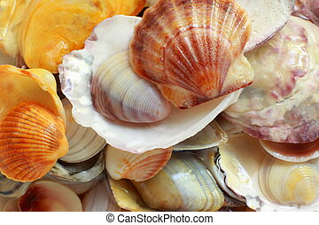 Photo background with shells