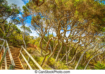 Eden Australia - Wooden stairs in the tropical forest to...