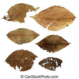 décomposer, feuilles