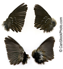 Sparrows wings - Set of Sparrows wings shown both front and...