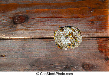 wasps' nest under a wooden roof