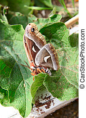 Butterfly sitting on green leaves ontop of wood pile
