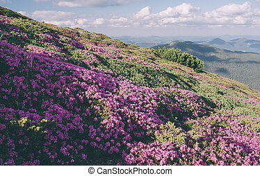 Mountain flowers in a sunny day Color toning Low contrast...