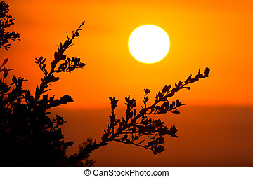 African Sunset - Big round setting sun in the African...