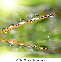 Fresh grass with dew drop closeup. Nature Background